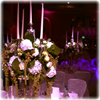 drapes, wedding, up lights, LED lights, stages